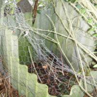 Afscherming kompostbak